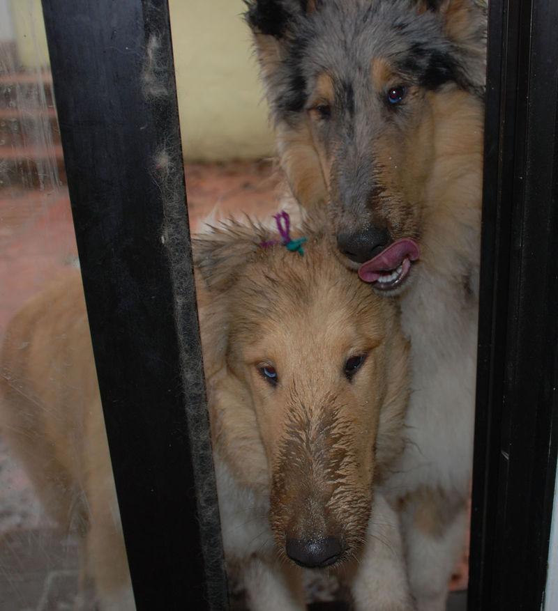 PuppiesEwwwwhhhhh2-09