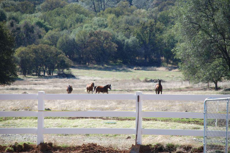 Horses10-25-09