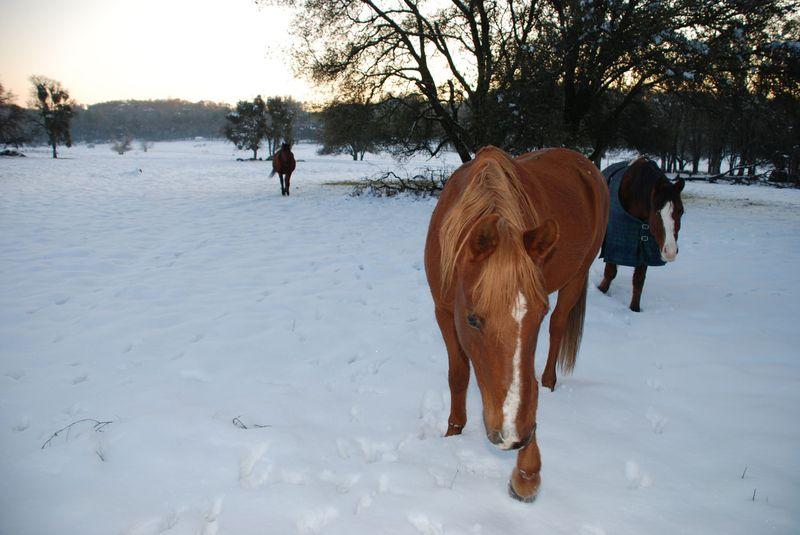 Tahoe&Horses12-09