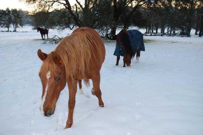 Tahoe&Horses12-09a