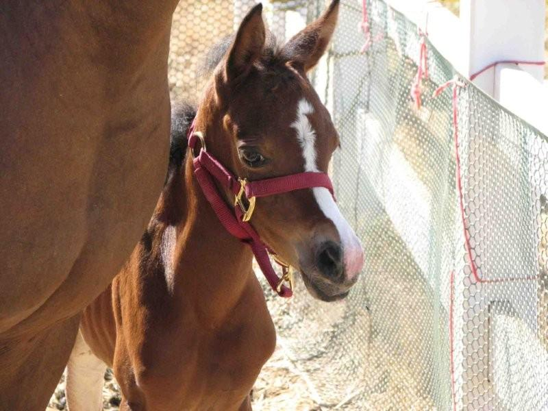 IMG_0842 nose fixed 2