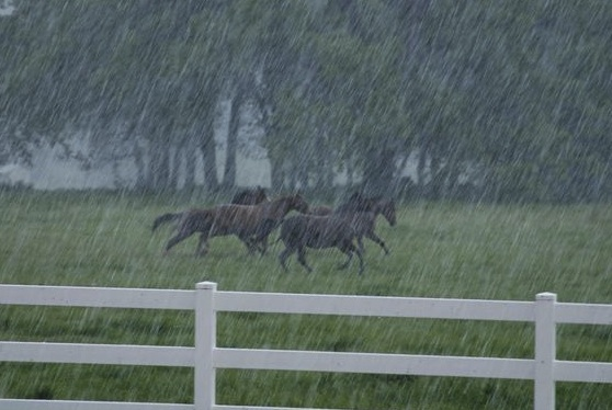 HorsesRunninginRain