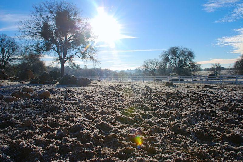 Frost&Sun