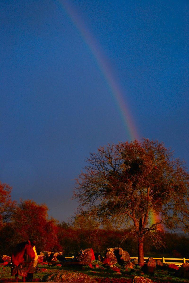Ali'i&Rainbow3-24-11
