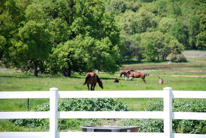 Horses&GoatsB