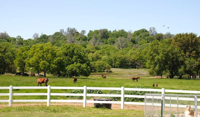 Goats&HorsesA