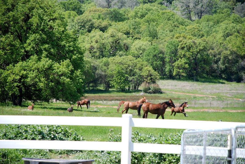 Horses&GoatsC