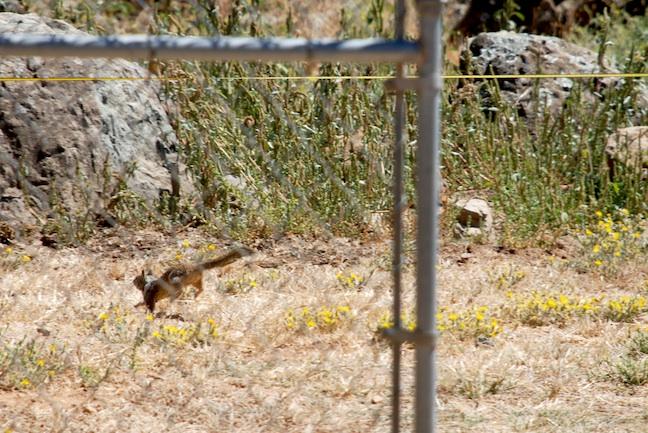 RunningSquirrel