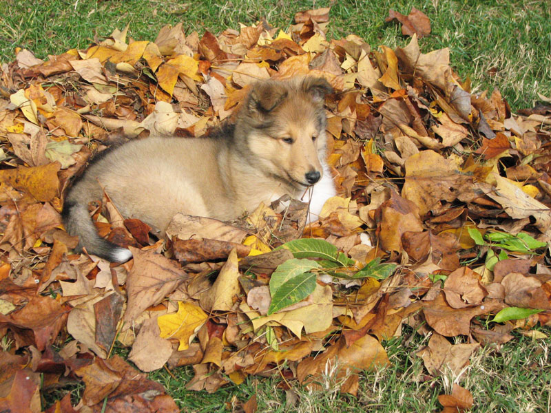 More-than-a-pile-of-leaves