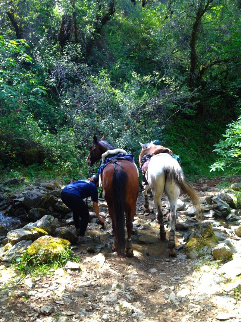 ReneeMaryAnne&HorsesAR50