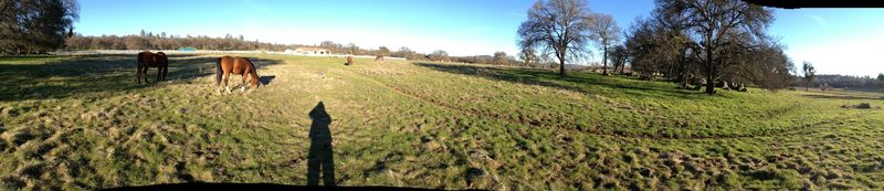 D&PanProp&Horses
