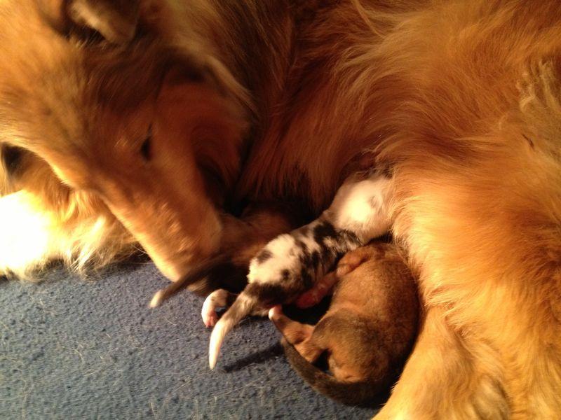 Soleil&Pups12-10-13