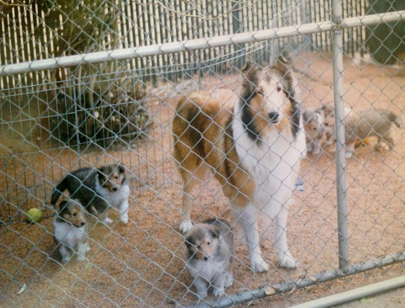 Rosie&Pups