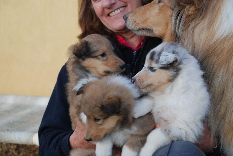 Puppies5Wks