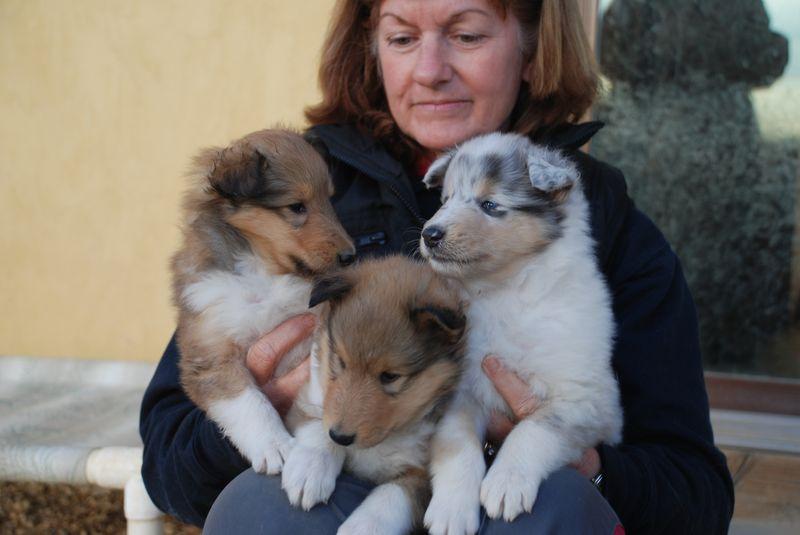 PuppiesWDenise5Wks