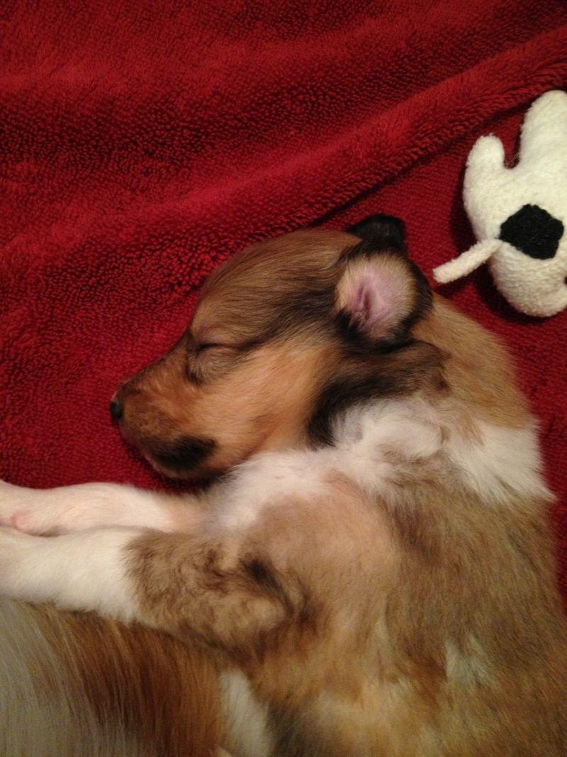 HollySleeping3Wks