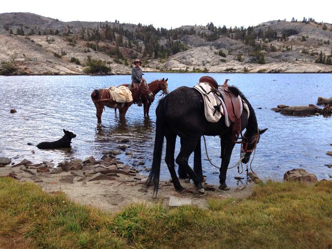 Horses&Dog1000Island