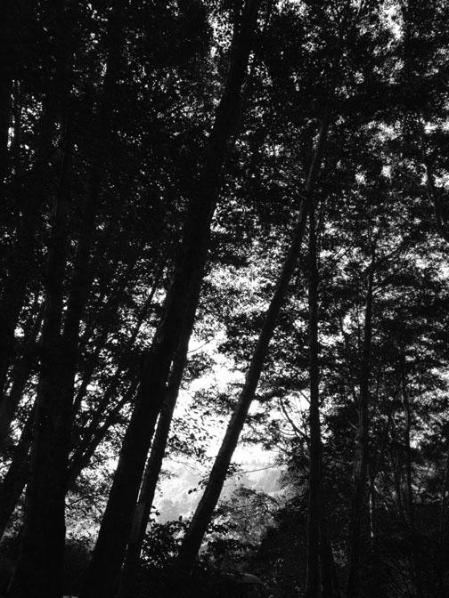TreesFortBragg