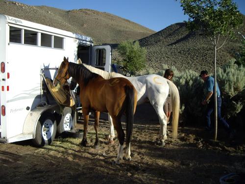 Horses82208tourdewashooo